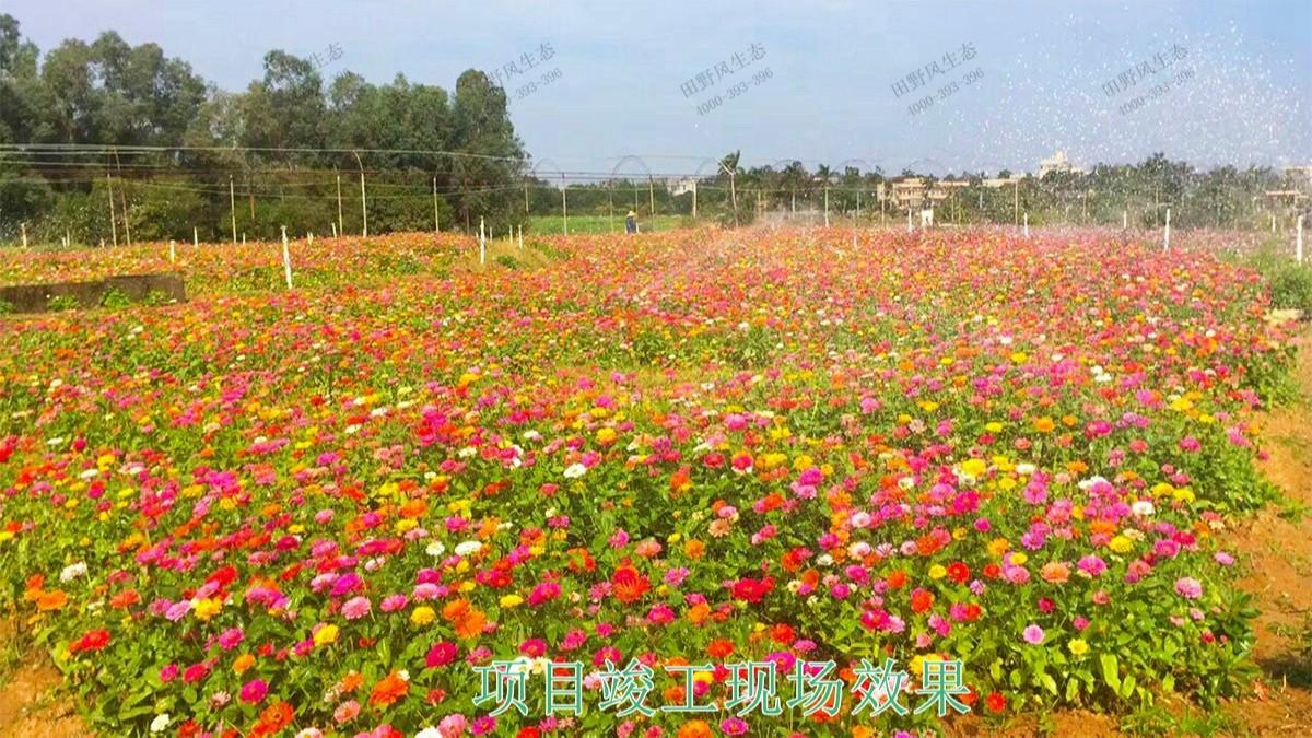 广西蒙山县景区花海工程