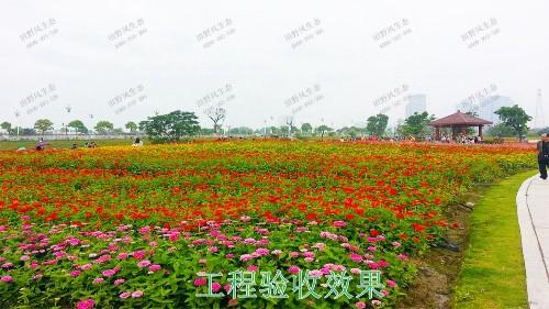 岭南大地休闲生态综合体项目
