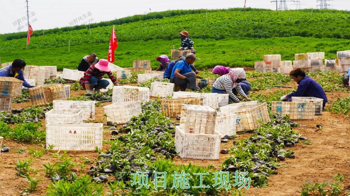 广西五彩田园休闲农业生态园