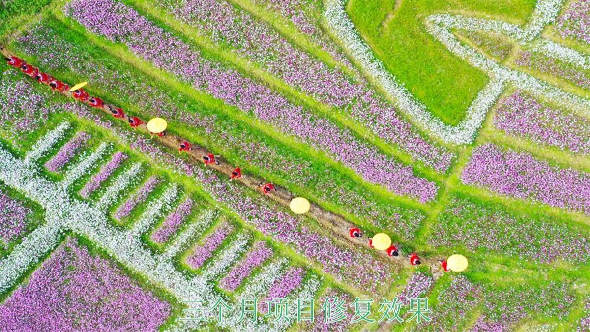 广西百色市景区花海种植