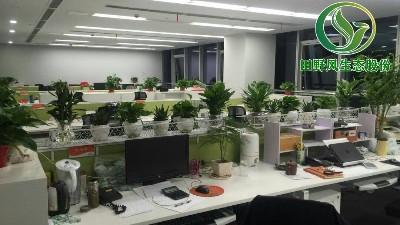 办公室绿化作用原来是如此之大!