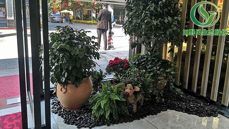 植物租摆,花卉养护