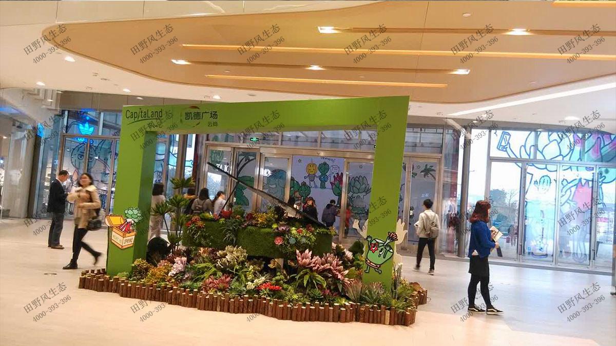 植物花卉组合租赁,花卉绿植租摆