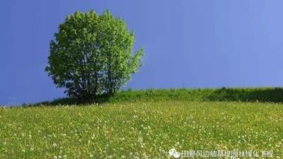 公路边坡生态防护对策与绿化植物选择