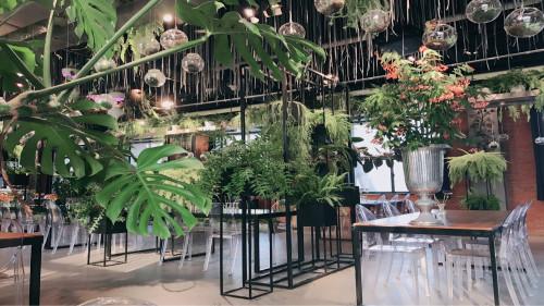 店铺植物租赁