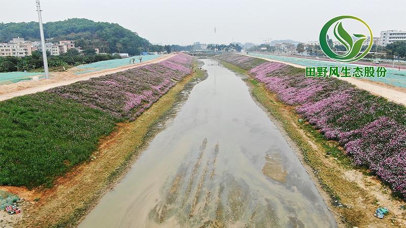 生态修复,边坡绿化