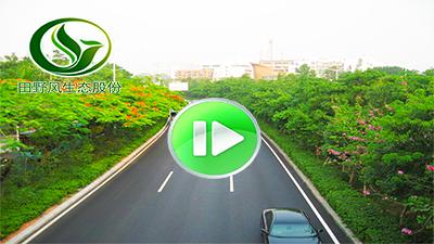 市政园林工程视频