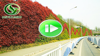 园林市政景观视频