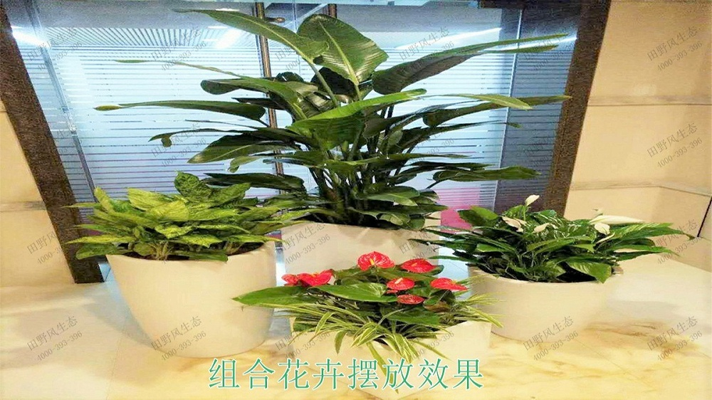 室内盆栽租摆,中铁二十五局集团绿化租摆案例