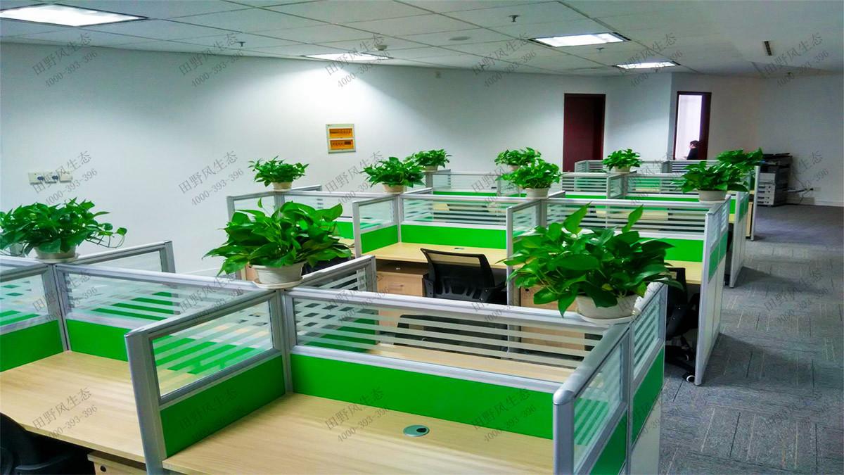 绿植租赁,植物租赁