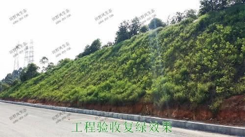 潮惠高速揭阳段高速公路边坡植草