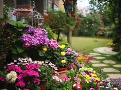 庭院秋天种什么花种子好?