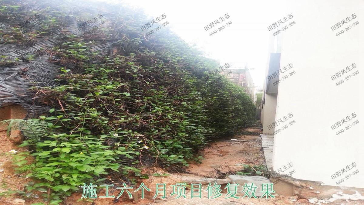 广东清远美林基业地产边坡生态修复工