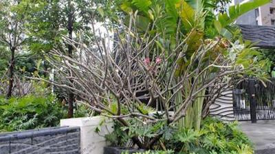 广州颐德公馆小区植物养护案例