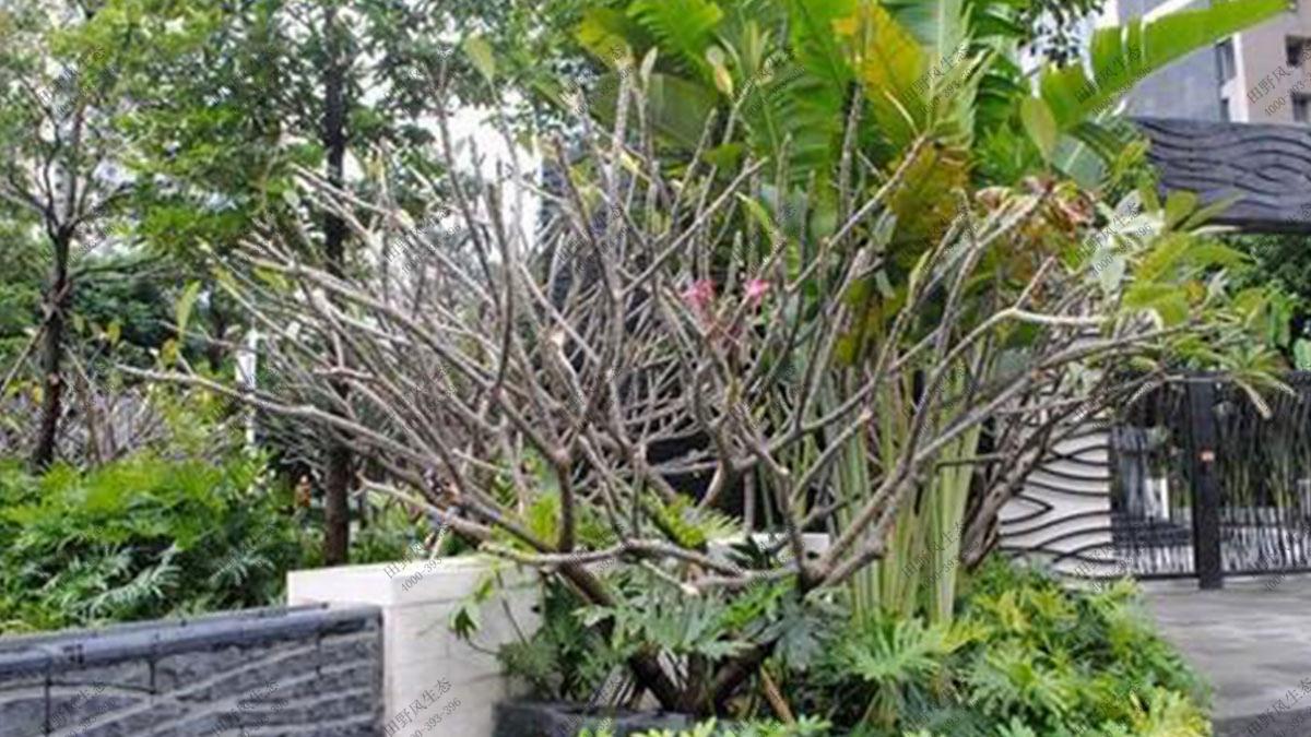 小区绿植养护,小区花卉养护