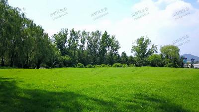 如何种植草坪草种,技术管理是关键
