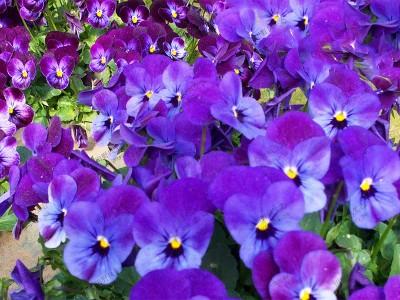 蓝色野花组合