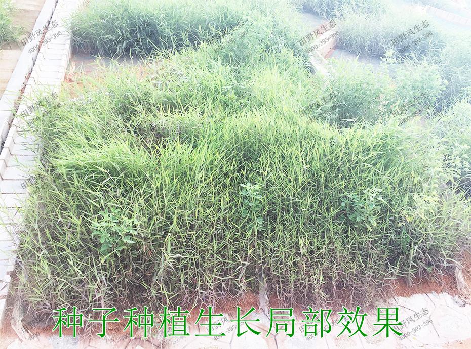 5种子种植生长局部效果
