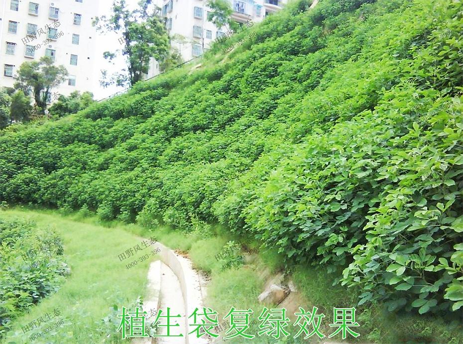 8植生袋复绿效果