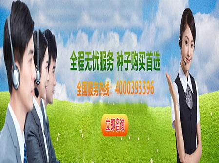 种子资材设备销售业务