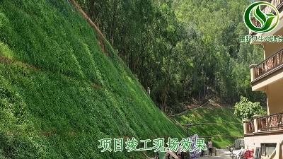东莞市国际公馆边坡绿化工程今日圆满验收