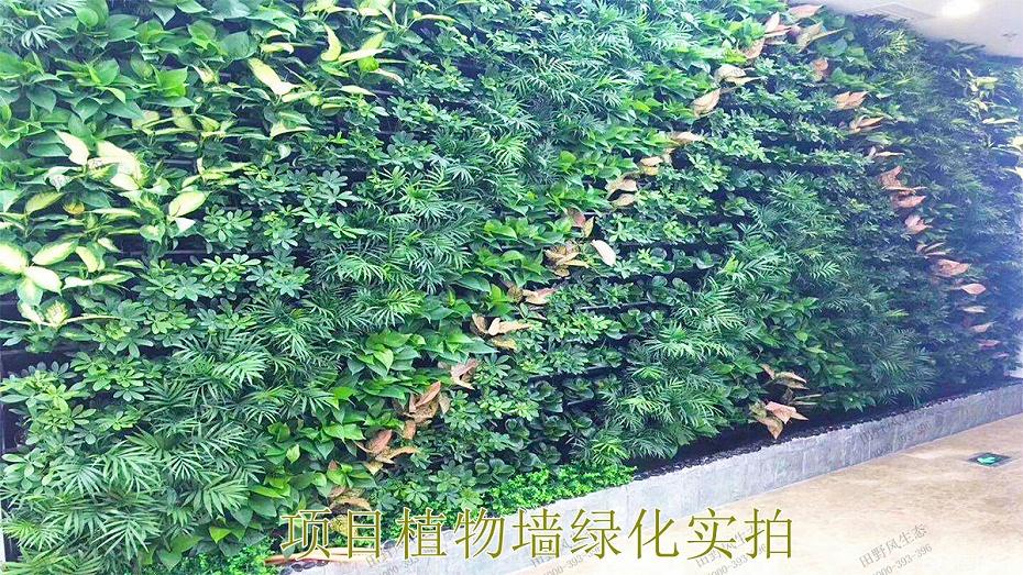 项目植物墙绿化实拍