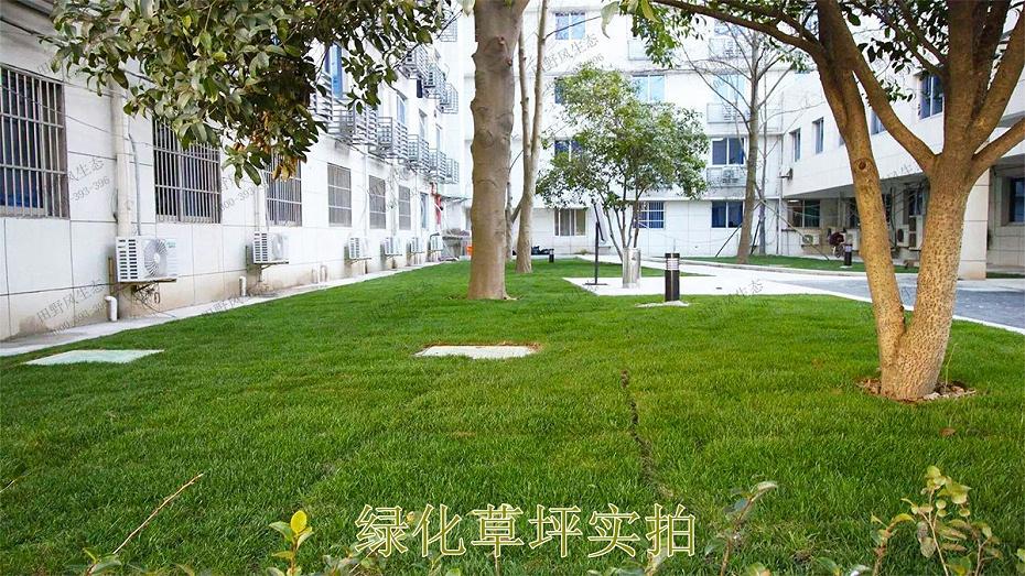 绿化草坪实拍