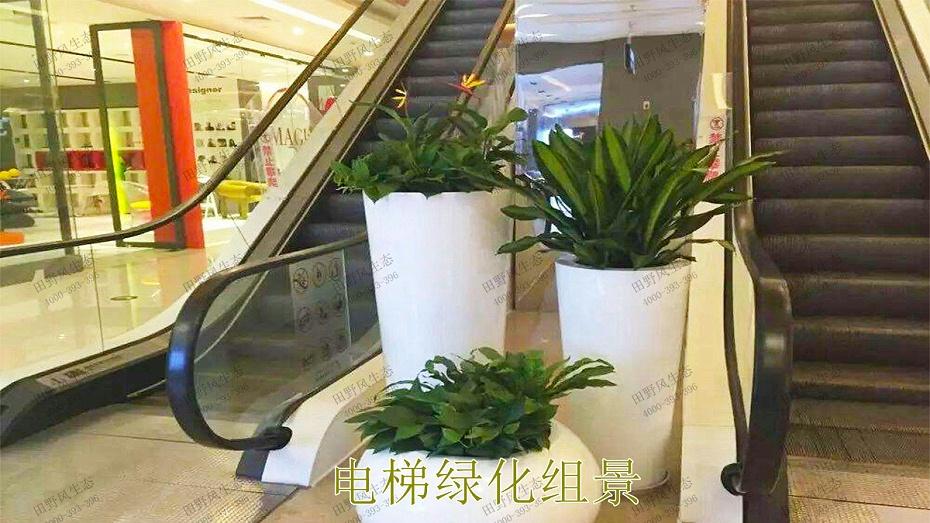 电梯绿化组景