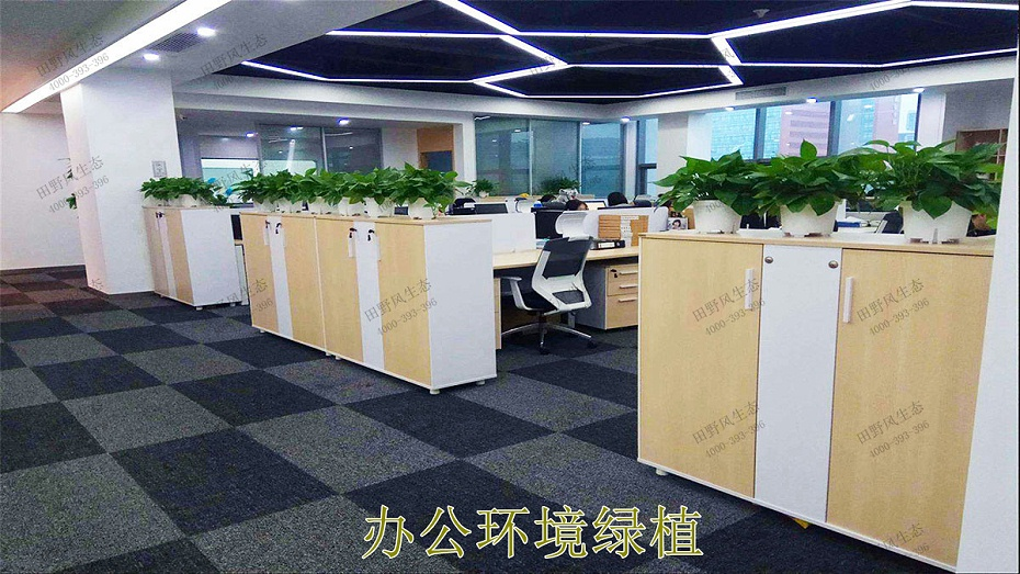 办公环境绿植