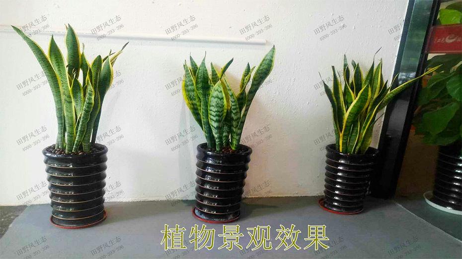 2植物景观效果