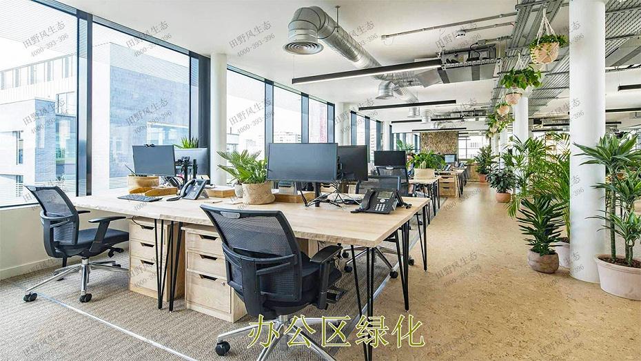 办公区绿化