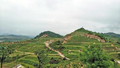边坡绿化工程是什么?田野风您详细解答