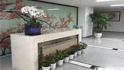办公室绿植租摆价格一般要多少?