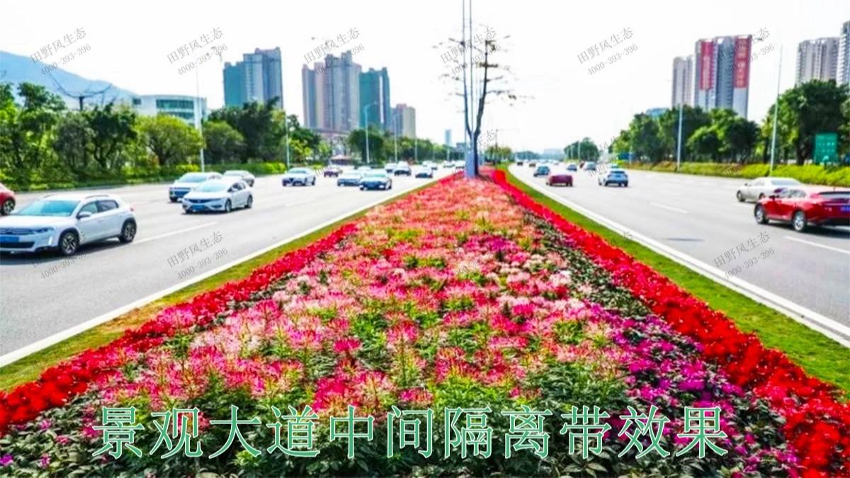 广东河源国道绿化美化市政工程