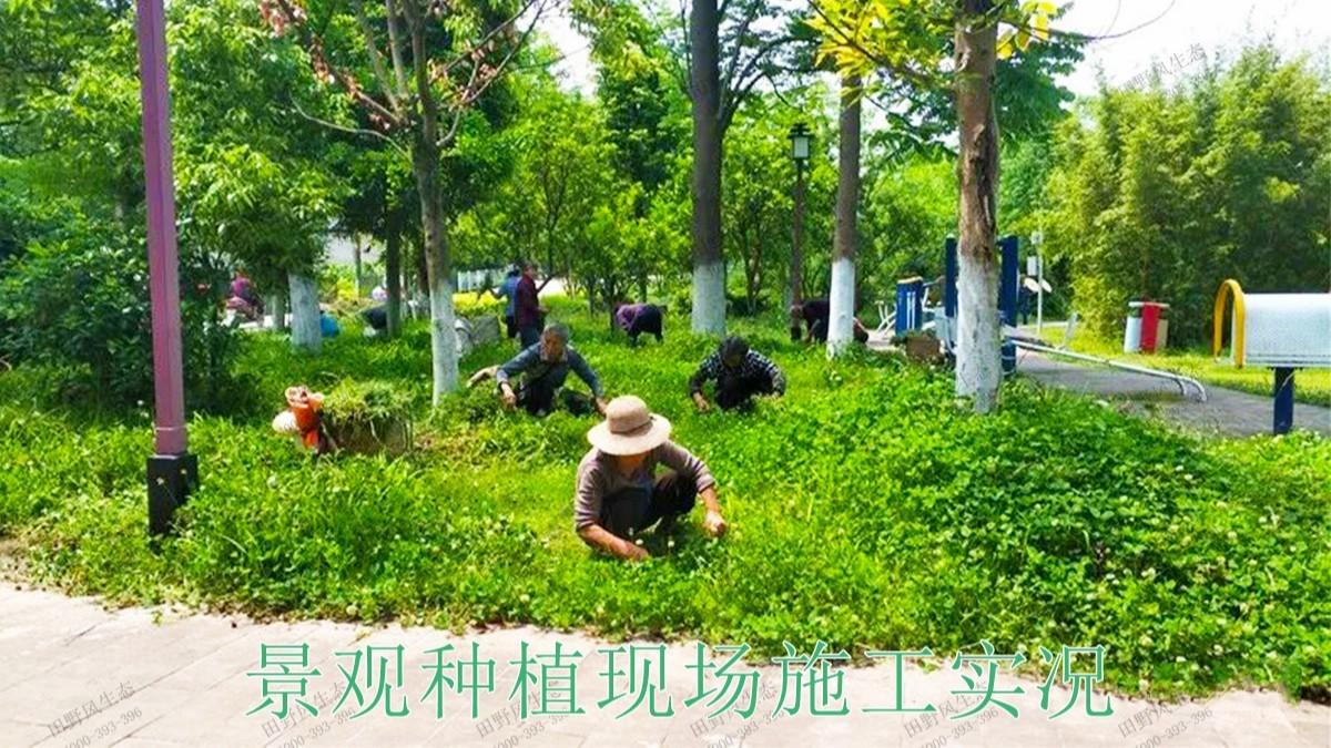 广东梅州梅江区绿化美化工程