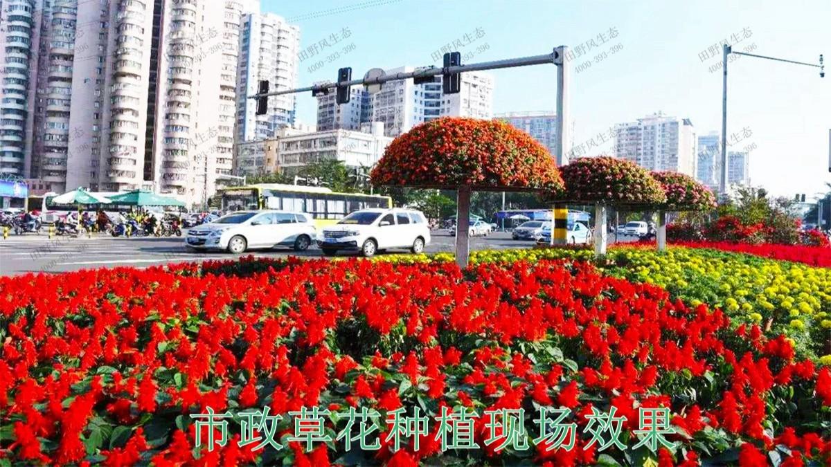 广东惠州市政景观园林工程