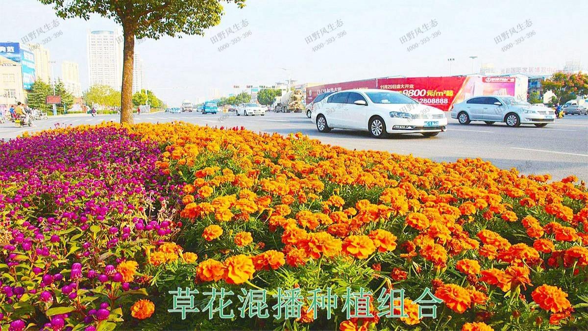 江门逢江区园林景观市政工程