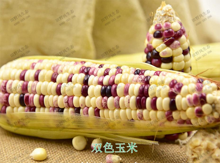 2双色玉米