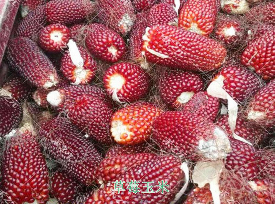 3草莓玉米
