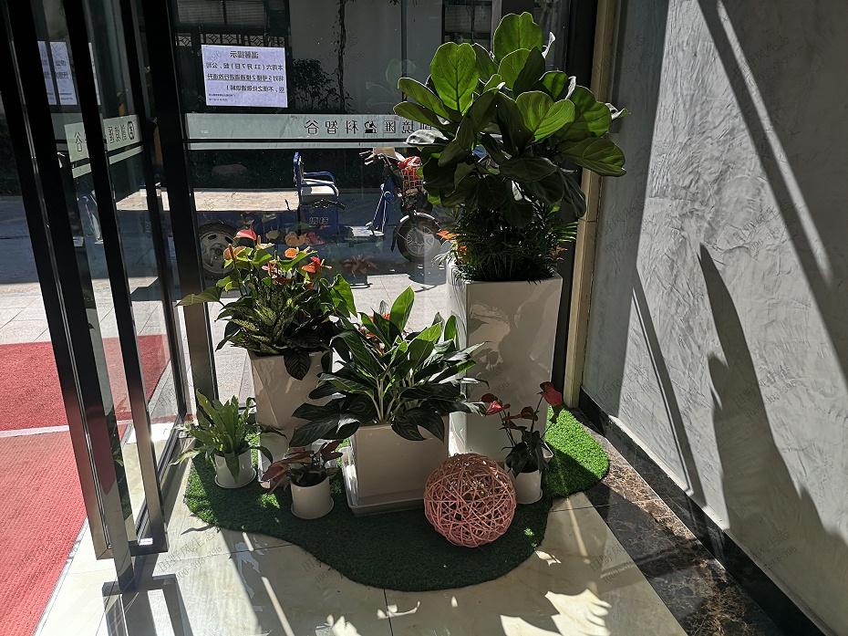 植物租赁,绿植租摆