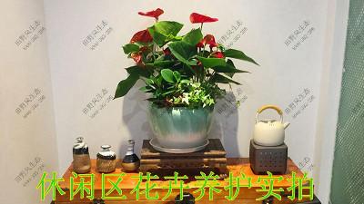 广东美的集团植物养护案例