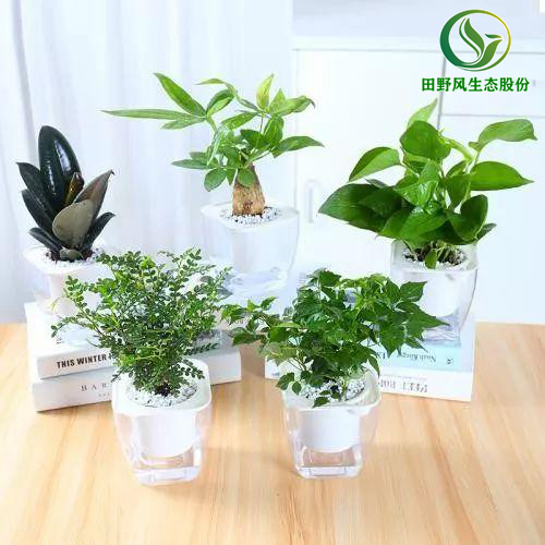 植物租摆,广州植物租摆