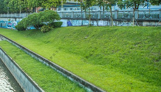 田野风告知你草坪种植需要注意哪些?