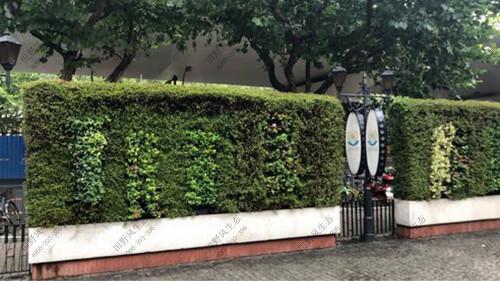 围墙植物养护解决方案