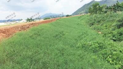 边坡喷播植草的好处有哪些?