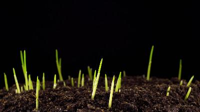 """如何看待花了32万网购的""""优质草种""""长不出好草!"""