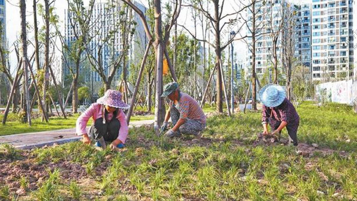 室外树木养护补植,大树养护