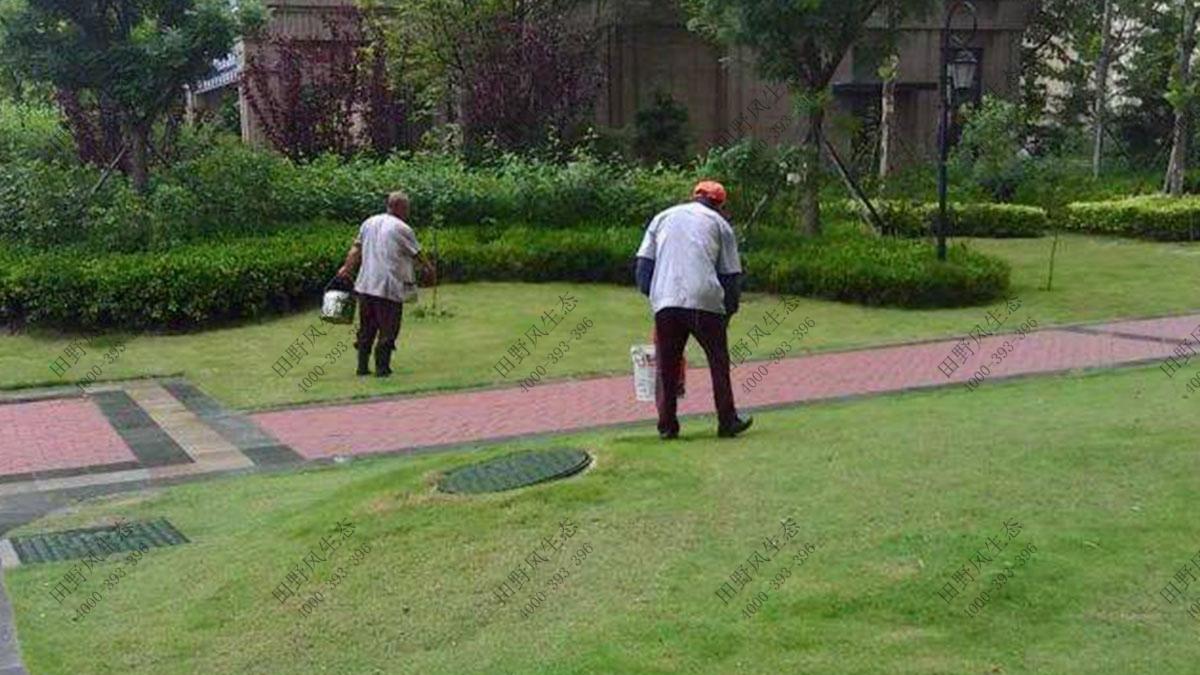 小区草坪养护,草地养护