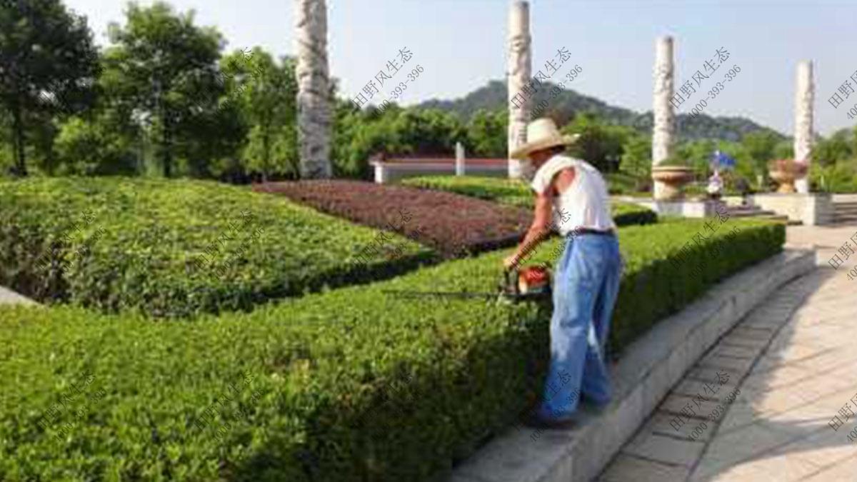 小区绿植养护,小区植物养护