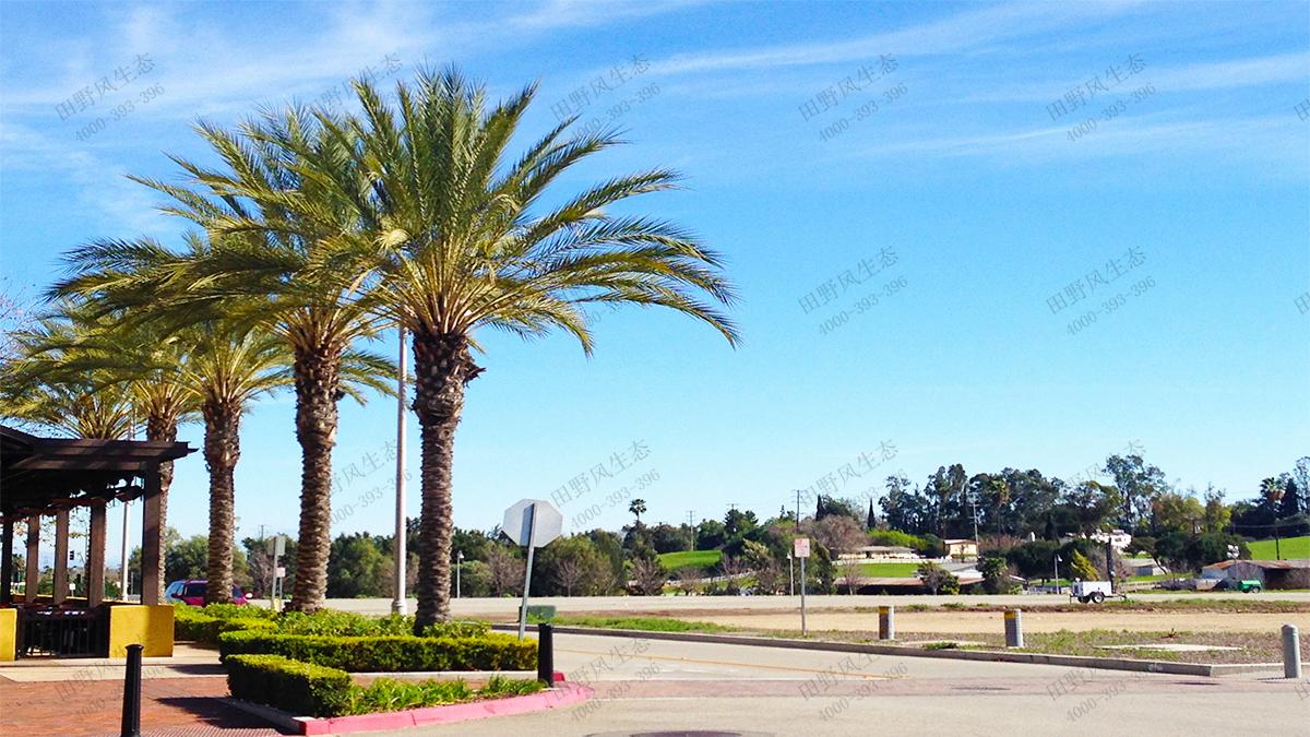 15棕榈树